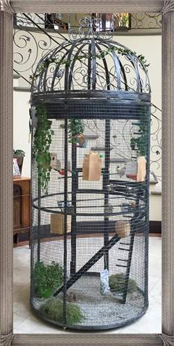 bc2-italian-birdcage