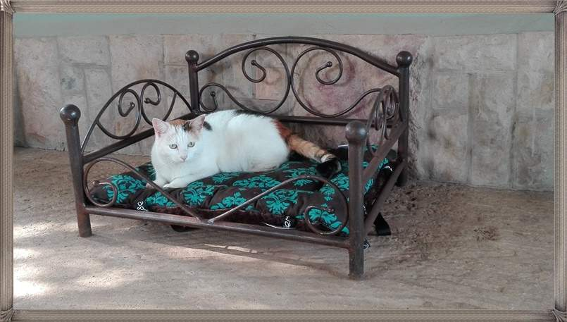 dog-and-cat-beds